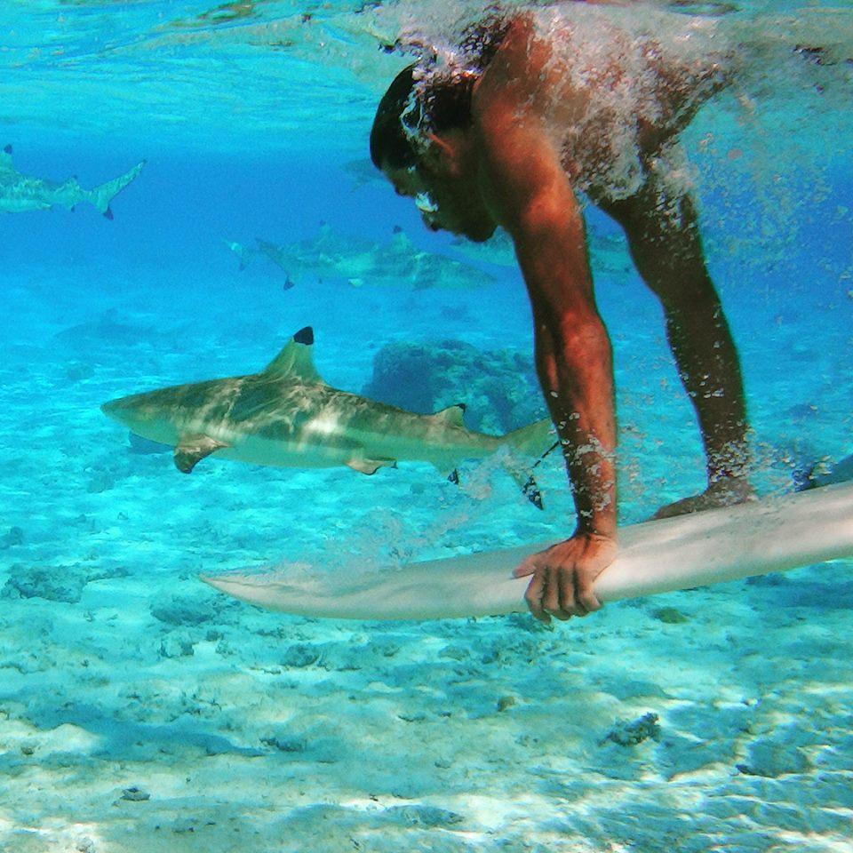 tiburones 2